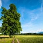 Evaluare proprietăţi imobiliare şi terenuri - Firmă de evaluare Haintz Consulting